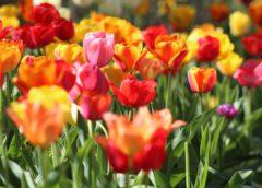 De tuin decoreren, 5 tips!