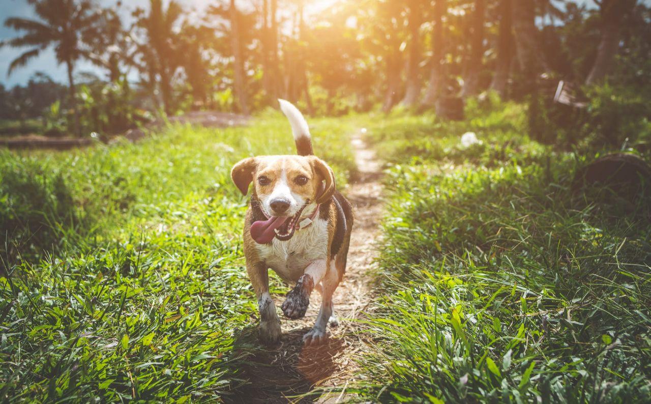 Honden loslopen