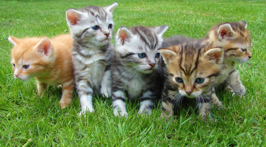 Huisdieren fotograferen
