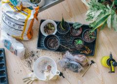 Hoe stek je jouw kamerplanten
